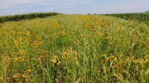 STRIPS (Science-based Trials of Rowcrops Integrated with Prairie Strips)