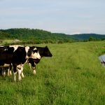 Working Together Locally For Farms, Streams and Good Community Economics